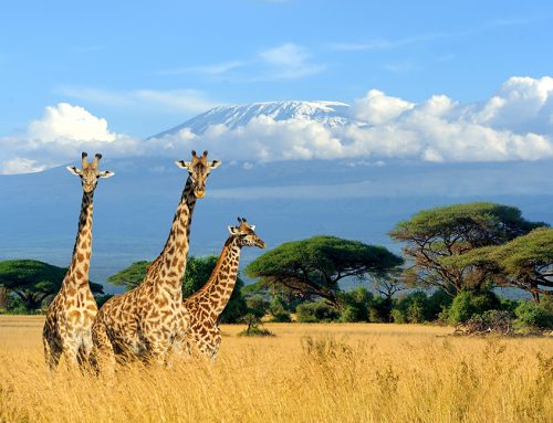 Experience the World's Most Exciting Luxury Wildlife Safaris